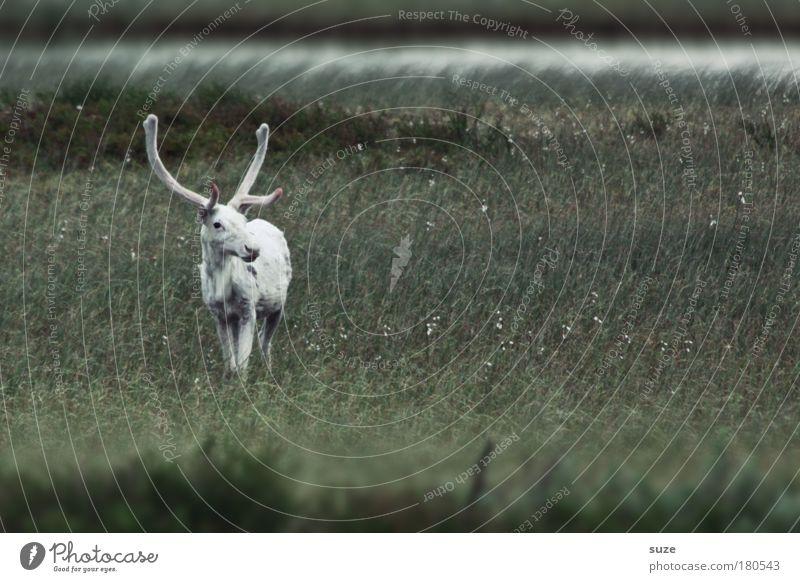 Einzelgänger Natur Ferien & Urlaub & Reisen grün weiß Pflanze Landschaft Tier Umwelt Wiese Feld Wind Wildtier warten ästhetisch Abenteuer einzigartig