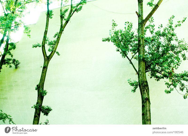 Bäume Baum Sommer Wand Mauer Hinterhof Hof Laubbaum Brandmauer