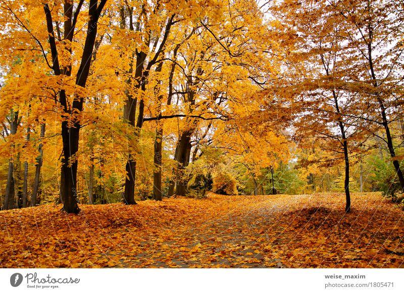 Bunter Park des Herbstes Oktober Natur Ferien & Urlaub & Reisen Pflanze Baum Landschaft rot Blatt Wald Umwelt Straße gelb natürlich Garten braun Tourismus