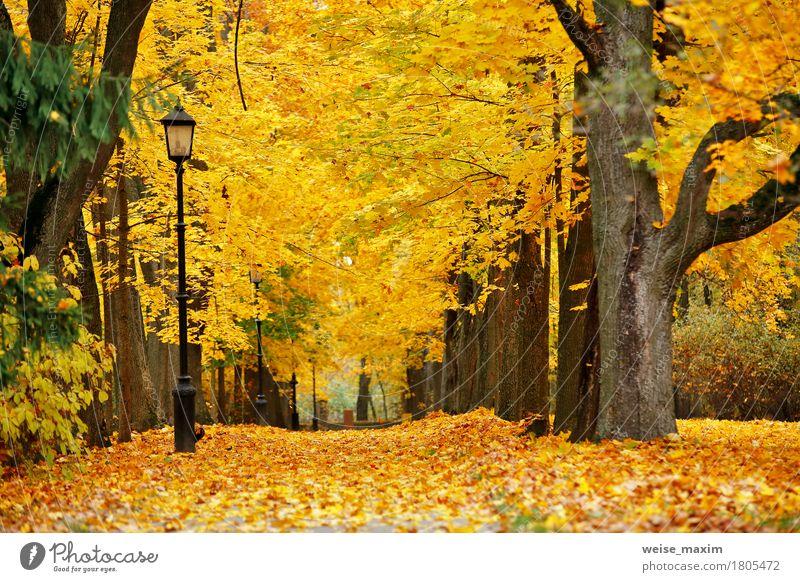 Bunter Park des Herbstes Oktober Ferien & Urlaub & Reisen Tourismus Ausflug Freiheit Natur Landschaft Pflanze Baum Blatt Wald Straße frisch natürlich braun gelb