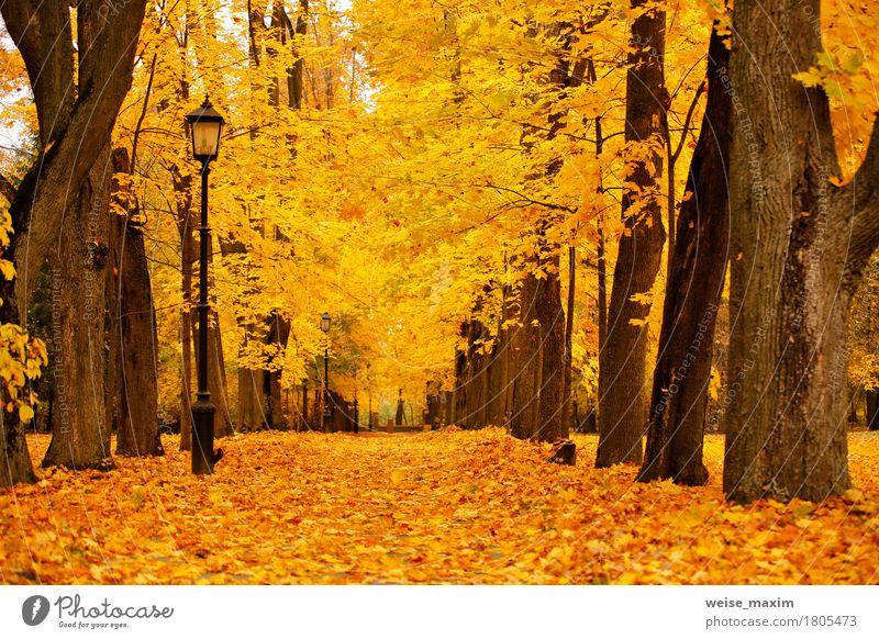Bunter Park des Herbstes Oktober. Laubbäume Gasse im Park Natur Ferien & Urlaub & Reisen Pflanze Baum Landschaft rot Blatt Wald Straße Umwelt gelb Wege & Pfade