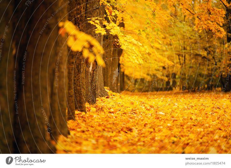 Bunter Park des Herbstes Oktober Natur Ferien & Urlaub & Reisen Pflanze Baum Landschaft rot Blatt Wald Umwelt gelb natürlich Freiheit braun Tourismus hell