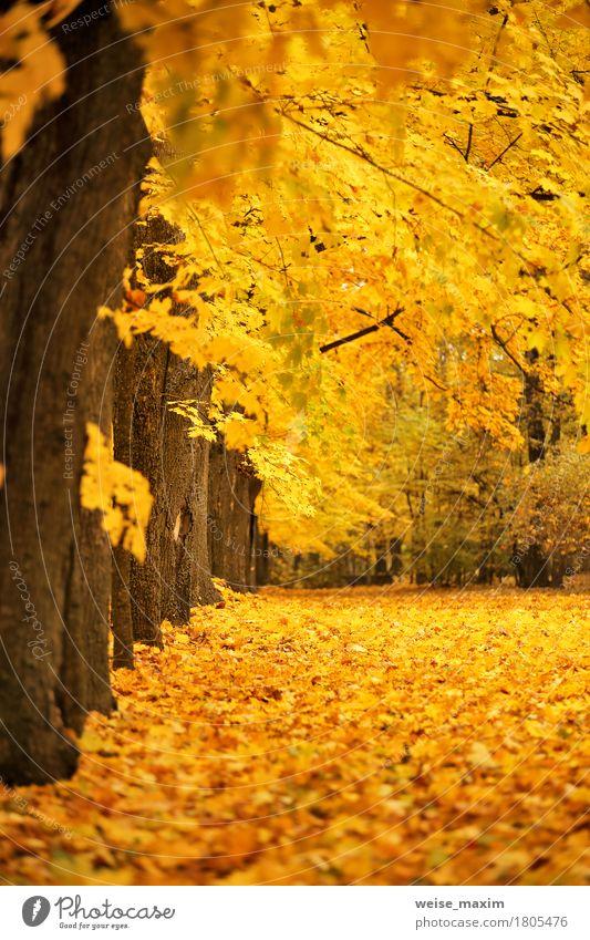 Bunter Park des Herbstes Oktober Ferien & Urlaub & Reisen Tourismus Umwelt Natur Landschaft Pflanze Baum Blatt Wald frisch hell natürlich braun gelb gold rot