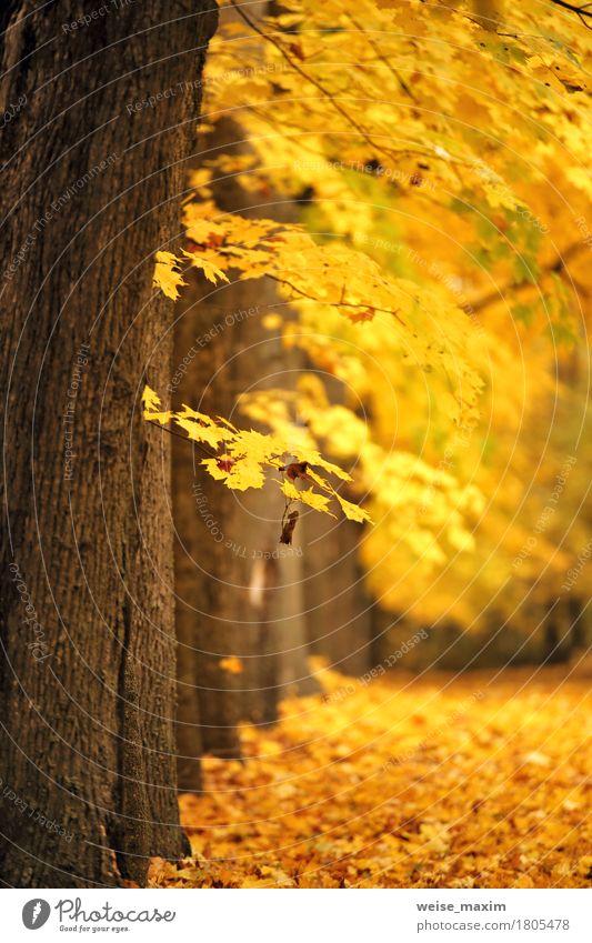 Bunter Park des Herbstes Oktober Natur Ferien & Urlaub & Reisen Pflanze Baum Landschaft rot Blatt Wald Umwelt gelb natürlich braun hell frisch