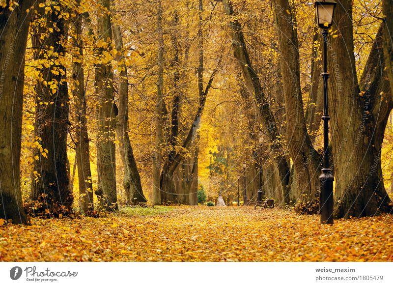 Laubbäume Gasse im Park Ferien & Urlaub & Reisen Tourismus Ausflug Natur Landschaft Pflanze Herbst Baum Blatt Garten Wald Straße frisch hell natürlich gelb gold