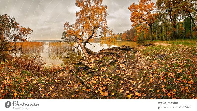 Oktober bunter Wald Umwelt Natur Landschaft Pflanze Himmel Wolken Herbst schlechtes Wetter Regen Baum Gras Blatt Grünpflanze Park Wiese Seeufer Flussufer hell