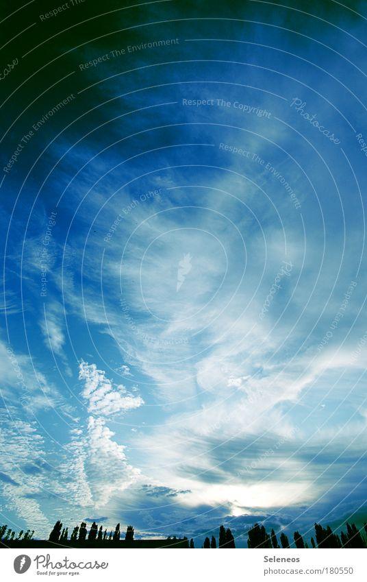 Himmel hoch jauchzend Natur blau Sonne Sommer Wolken Wald Erholung Freiheit Landschaft Umwelt Erde Luft Wetter Wind