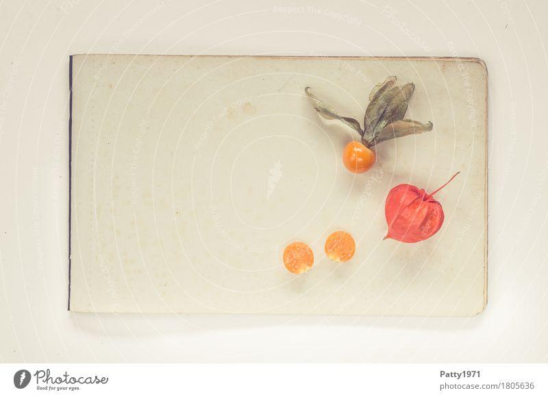 Physalis alkekengi Lebensmittel Frucht Lampionblume Stillleben Ernährung Vegetarische Ernährung Gesundheit retro rund sauer süß orange Farbfoto Studioaufnahme