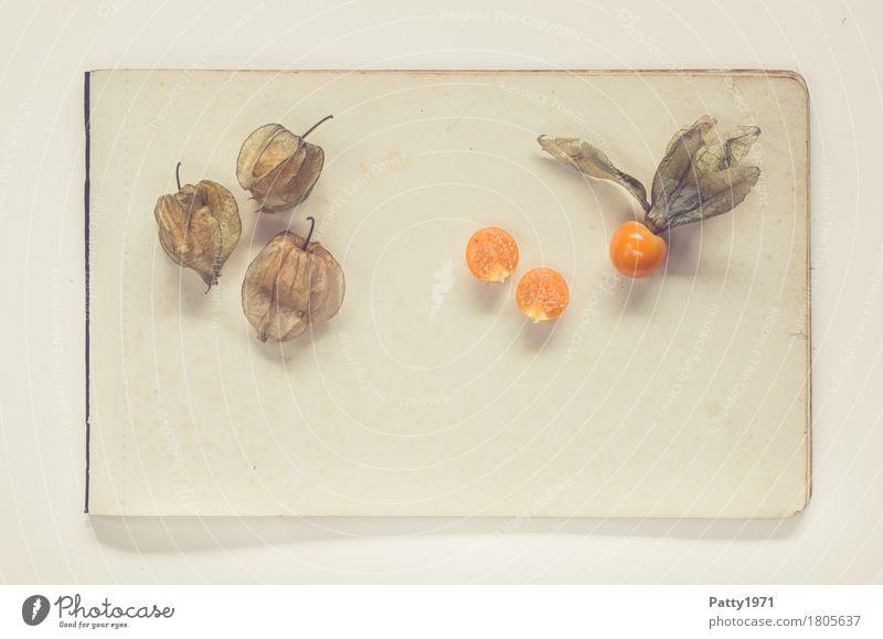 Physalis alkekengi Lebensmittel Frucht Lampionblume Papier Zettel exotisch frisch Gesundheit retro rund sauer süß braun orange genießen Stillleben Farbfoto