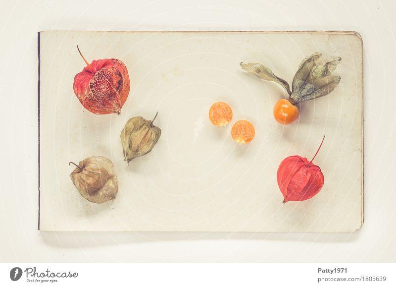 Physalis alkekengi Lebensmittel Frucht Lampionblume Stillleben Ernährung Vegetarische Ernährung Papier Zettel frisch Gesundheit retro rund sauer süß braun