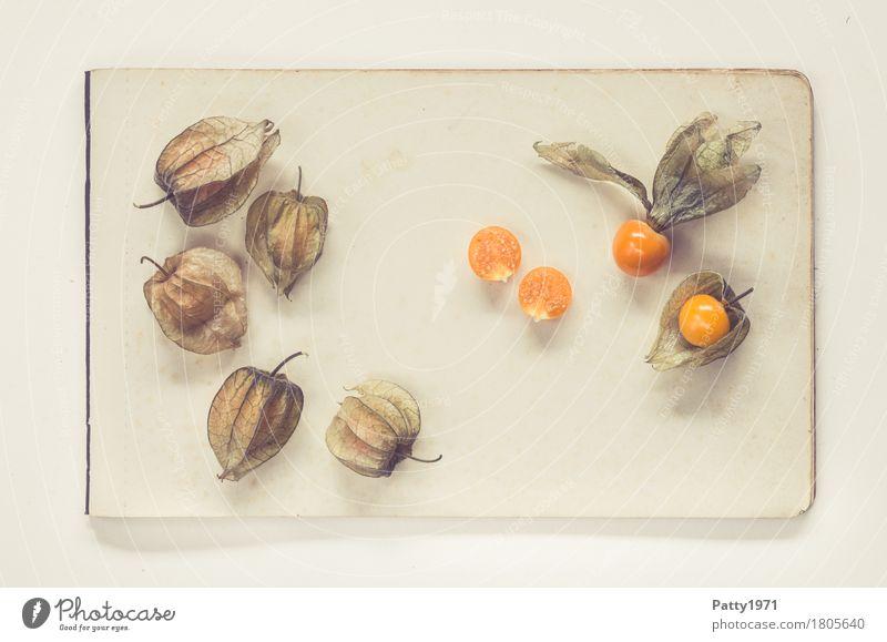 Physalis alkekengi Lebensmittel Frucht Lampionblume Ernährung Vegetarische Ernährung Papier Zettel exotisch frisch Gesundheit retro rund sauer süß braun orange
