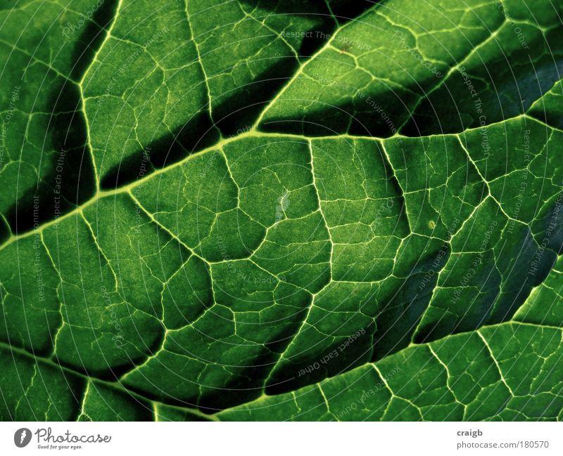 Natur Pflanze grün Sommer Blatt Umwelt Hintergrundbild Park Sträucher Schönes Wetter Makroaufnahme Synthese Photosynthese