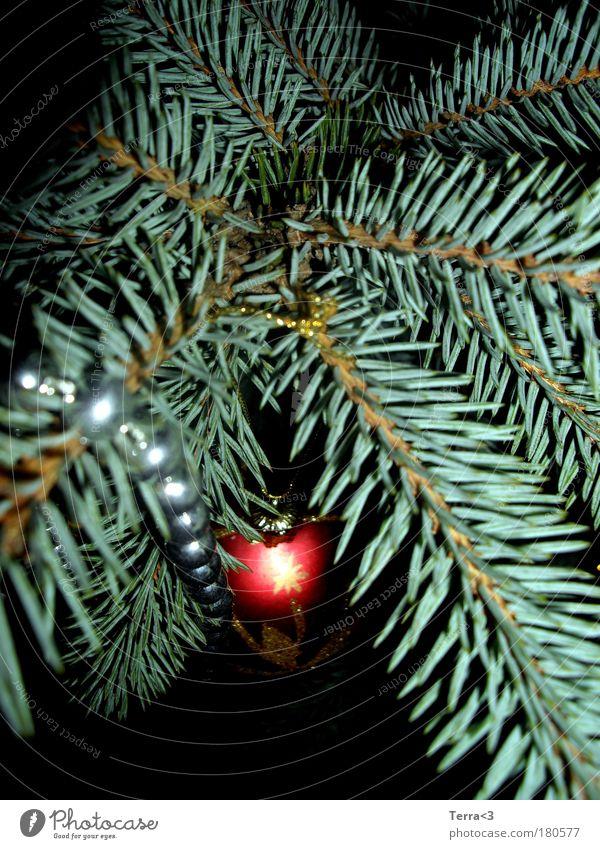 Lebkuchen gibt's ja auch schon. Weihnachten & Advent grün rot ruhig Winter schwarz Feste & Feiern Stimmung Zusammensein glänzend Dekoration & Verzierung elegant