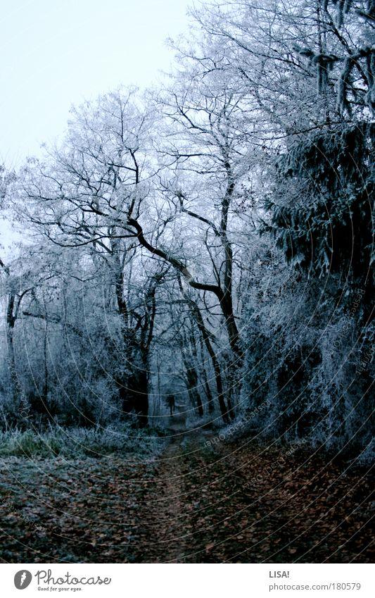 winter wonderland Farbfoto Gedeckte Farben Außenaufnahme Menschenleer Abend Dämmerung Kontrast Silhouette Zentralperspektive Umwelt Natur Landschaft Pflanze