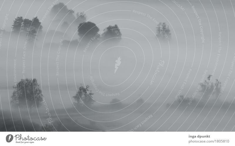 Dicke Luft Umwelt Natur Landschaft Pflanze Herbst Klima Wetter Nebel Baum Wiese Feld Salzkammergut Österreich Zeller See natürlich Schwüle Ferne undurchsichtig