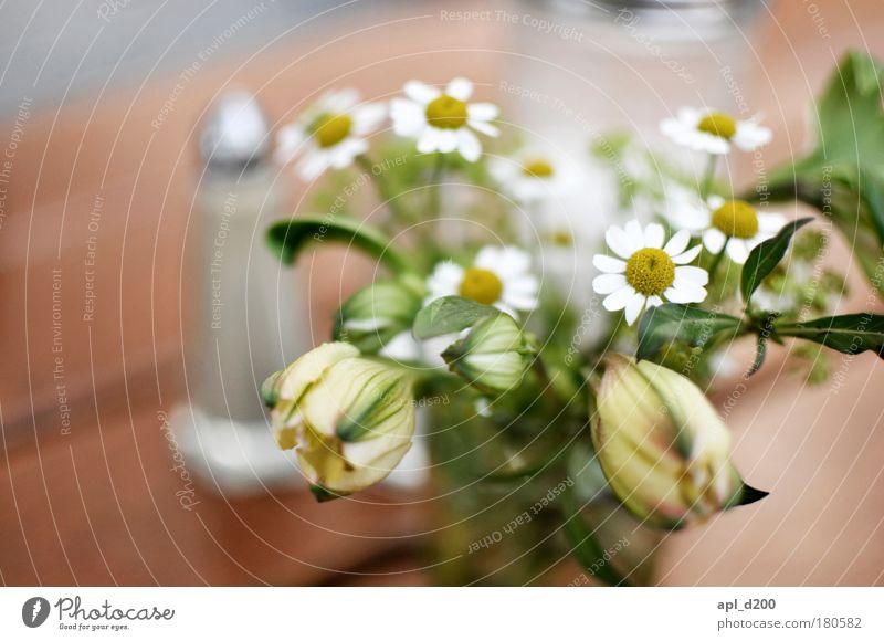 Anna Blume grün Pflanze Freude Ernährung gelb Leben Erholung Blüte Frühling Glück braun Umwelt ästhetisch authentisch Duft