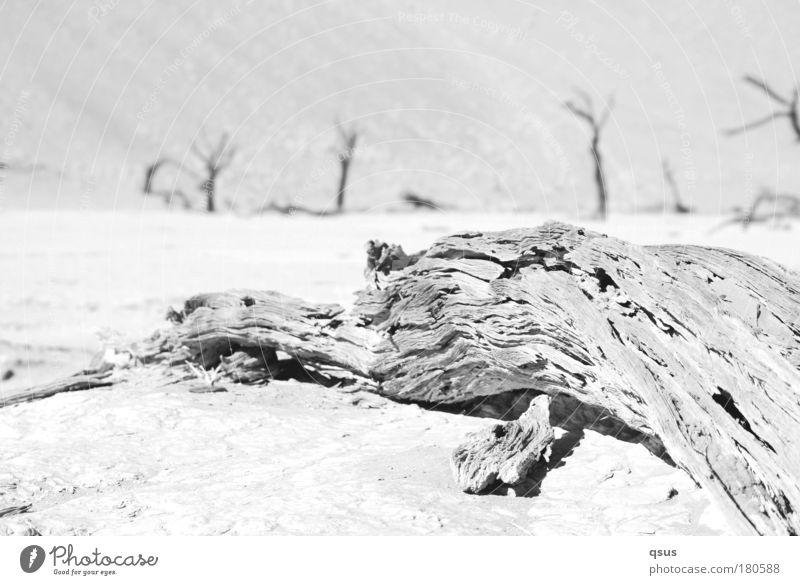 Wassermangel Natur alt Baum Pflanze Einsamkeit Ferne Tod Landschaft Umwelt Holz Sand Wärme Traurigkeit hell Erde Klima