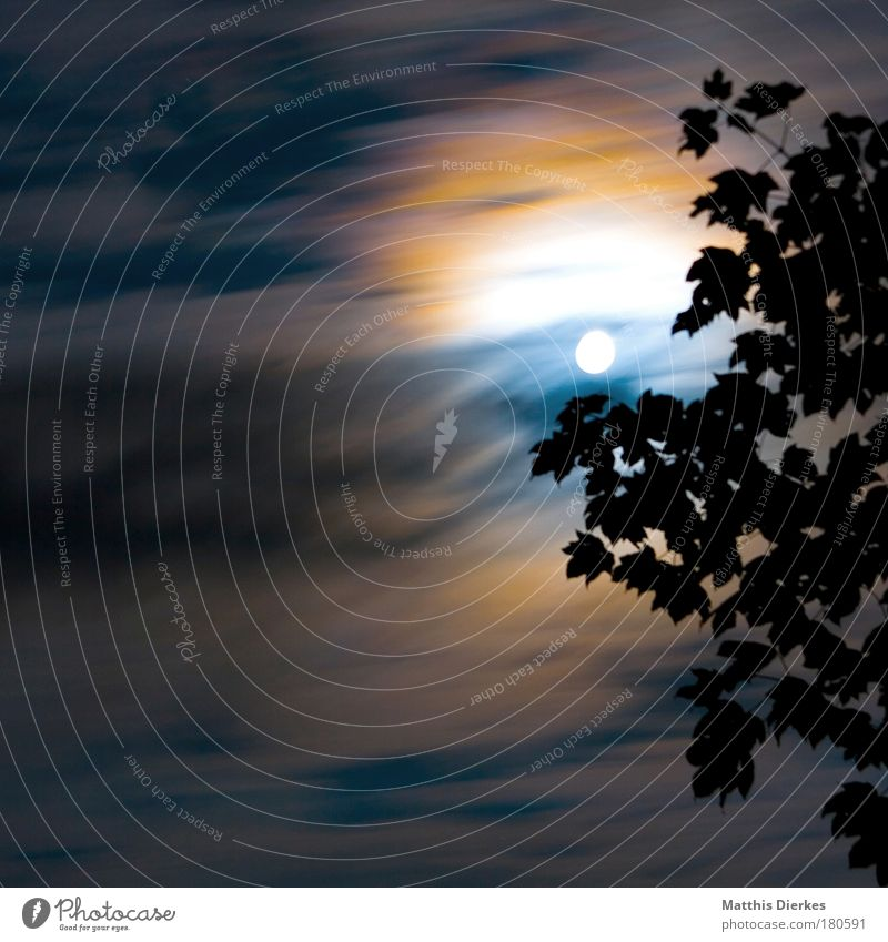 Geisterstunde Mond Vollmond Wolken Langzeichbelichtung Werwolf dunkel geheimnisvoll Blatt Baum Angst bedrohlich orange blau weiß Schleier Halo Nacht rund
