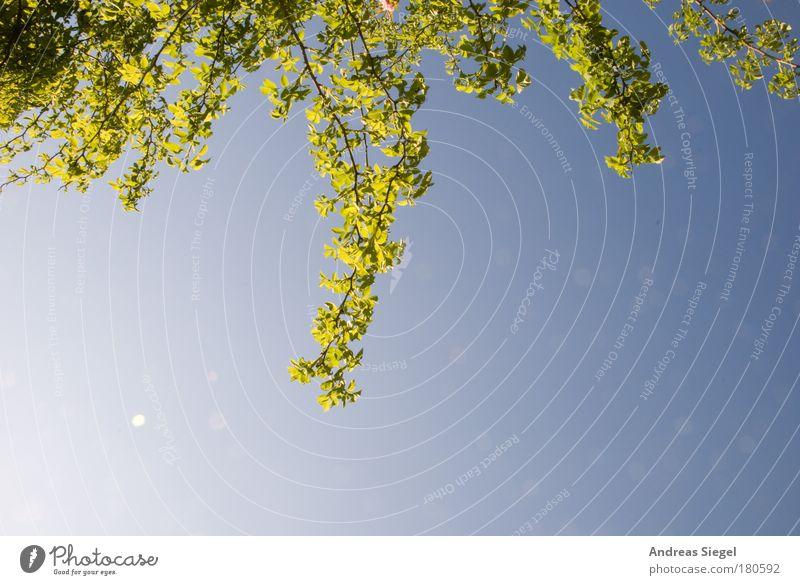 Im Rosengarten auf der Bank mit Abstandhalter Natur Himmel Baum grün blau Pflanze Sommer Freude Blatt Erholung Gefühle Frühling Freiheit Glück träumen Park