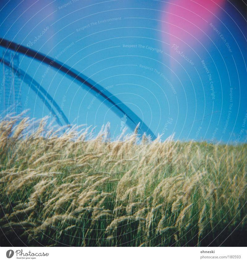 Tarantula II Farbfoto mehrfarbig Außenaufnahme Experiment Holga Tag Lichterscheinung Natur Landschaft Pflanze Himmel Gras Wiese blau Halde Halde Hoheward