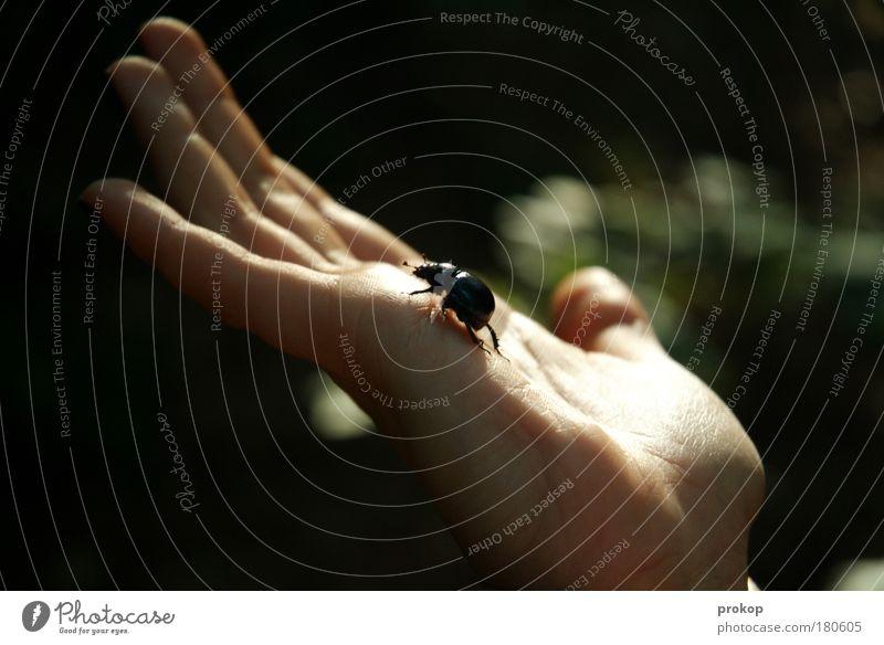 Gipfelstürmer Mensch Natur Hand Tier Umwelt klein Angst Finger Klettern Schutz Lebewesen Mut anstrengen Käfer Ekel Umweltschutz