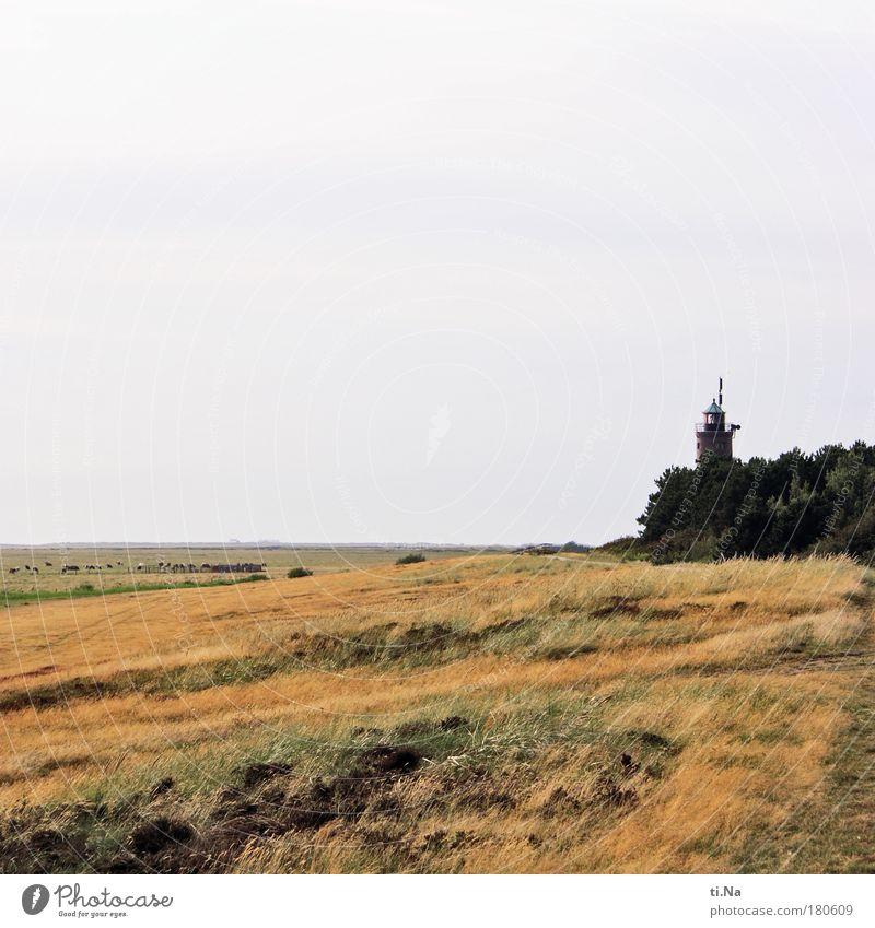 SPO|09 die große Lampe von Böhl Natur Himmel Baum grün Pflanze rot Sommer Freude Strand Tier gelb Erholung Gras Landschaft Küste laufen