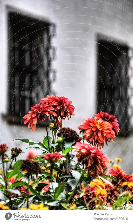 blumen für einen mörder Leben Wohlgefühl Duft Häusliches Leben Dekoration & Verzierung Trauerfeier Beerdigung Gartenarbeit Ruhestand Pflanze Blume Blüte Park