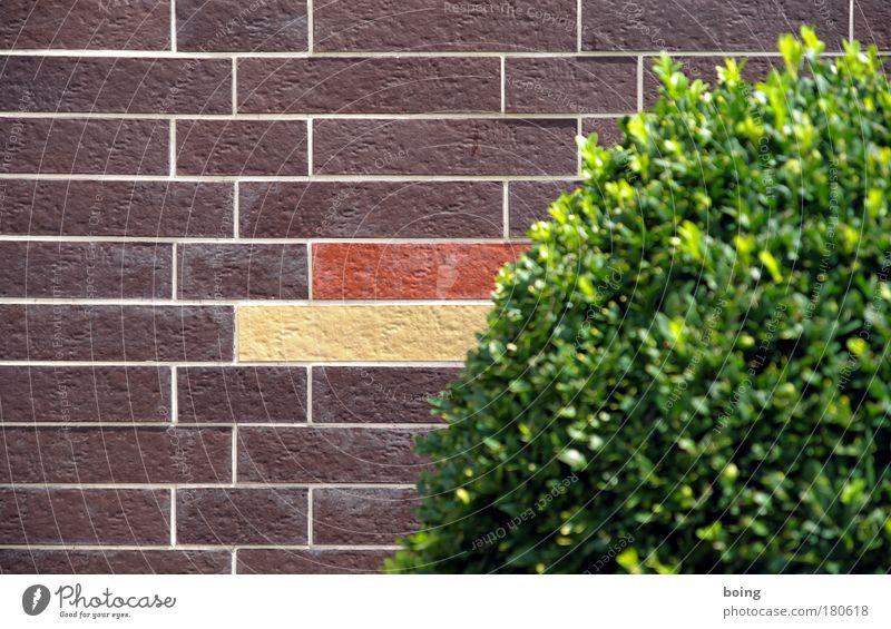 braun rot gold Farbfoto Häusliches Leben Haus Traumhaus Garten Vorgarten Gartenarbeit Fassadenreiniger Sträucher Grünpflanze Buchsbaum Mehrfamilienhaus Mauer