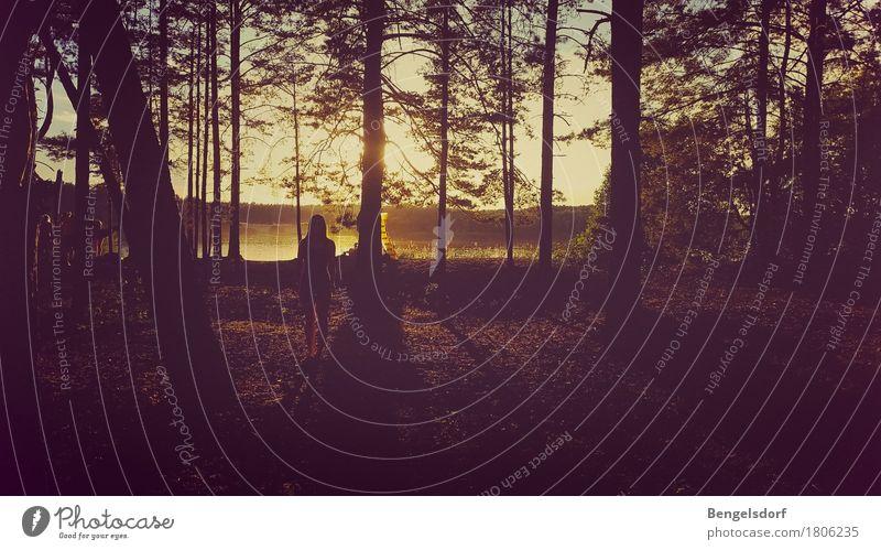 Waldlicht Mensch Natur Ferien & Urlaub & Reisen Jugendliche Sommer Baum Erholung Einsamkeit ruhig Umwelt Leben feminin See Freizeit & Hobby träumen