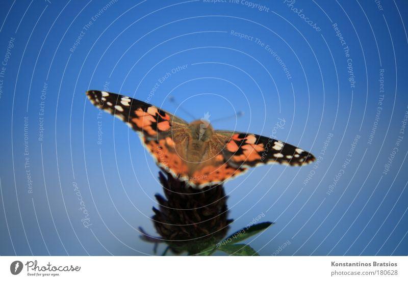 NATURE LOVE Farbfoto Außenaufnahme Nahaufnahme Abend Unschärfe Froschperspektive Tierporträt elegant Natur Wolkenloser Himmel Sommer Herbst Schönes Wetter