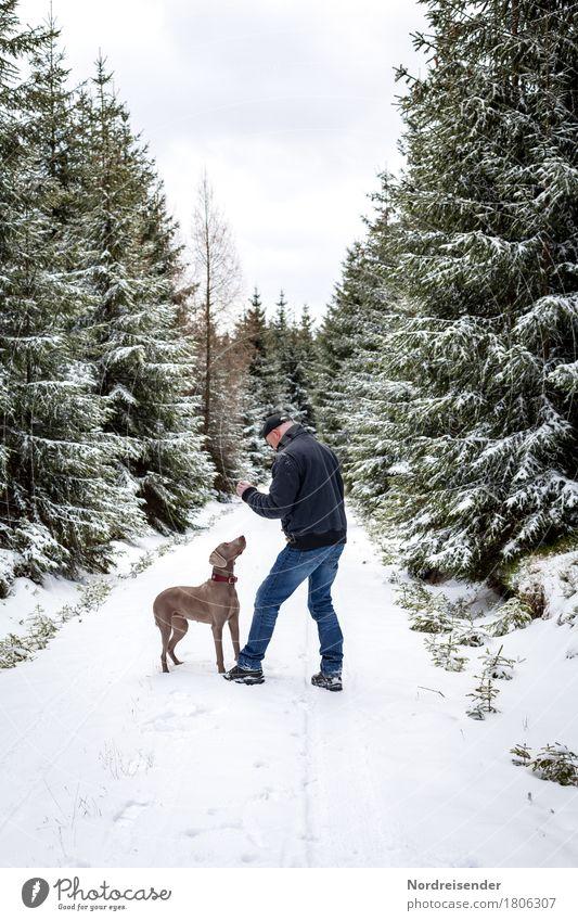 Winterspaß Freizeit & Hobby Spielen Ausflug Schnee Winterurlaub Mensch maskulin Mann Erwachsene Natur Wetter Schneefall Baum Wald Wege & Pfade Tier Haustier