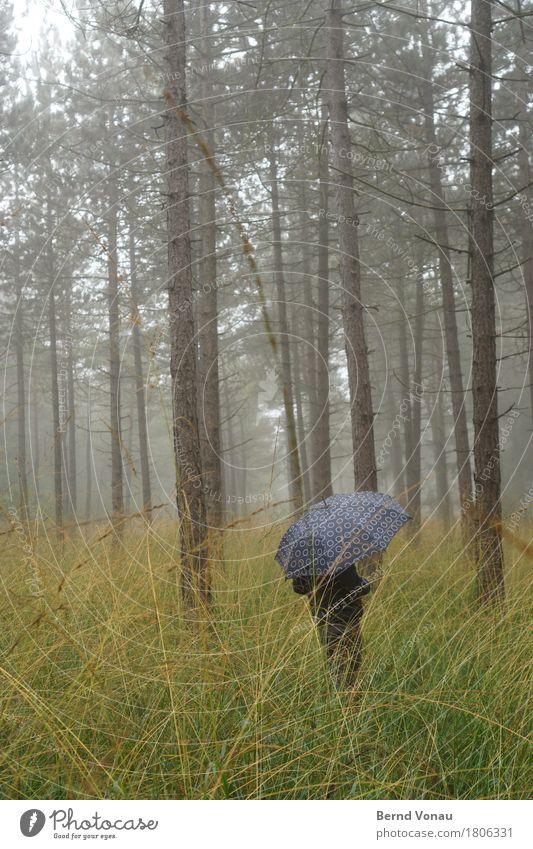 schutz Mensch 1 Umwelt Natur Landschaft Pflanze Herbst Klima Wetter schlechtes Wetter Nebel Baum Gras Sträucher Wald Gefühle Stimmung Spaziergang
