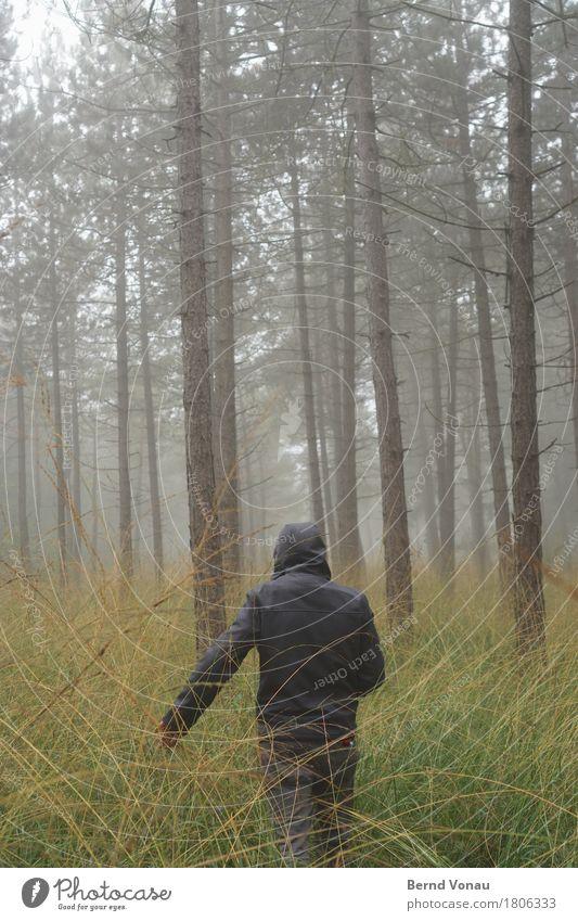 /|| 1 Mensch gehen Wald Spaziergang schlechtes Wetter grün Herbst Baum Kiefer dünn hoch Einsamkeit nachdenklich Wetterschutz Kapuze Gras Natur grau Nebel Dunst
