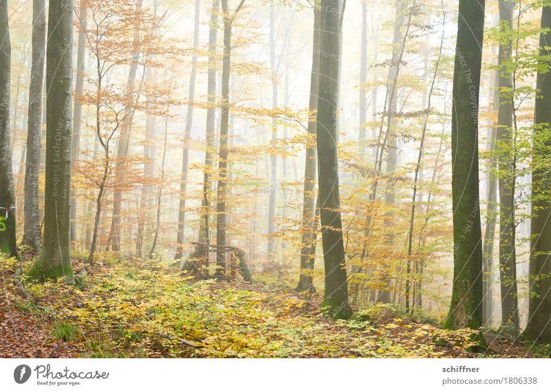 Das Unbekannte dahinter Natur Pflanze Herbst schlechtes Wetter Nebel Baum Grünpflanze Wald achtsam Waldboden Waldlichtung Waldspaziergang Herbstlaub Baumstamm