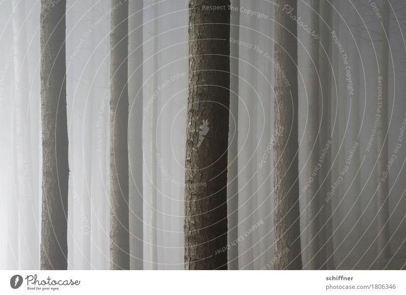 monoton | Nebelwald Natur Baum Wald dunkel Baumstamm Nebelschleier Nebelstimmung Nebelwand Barcode Linie vertikal Schwarzwald Herbst Winter Außenaufnahme