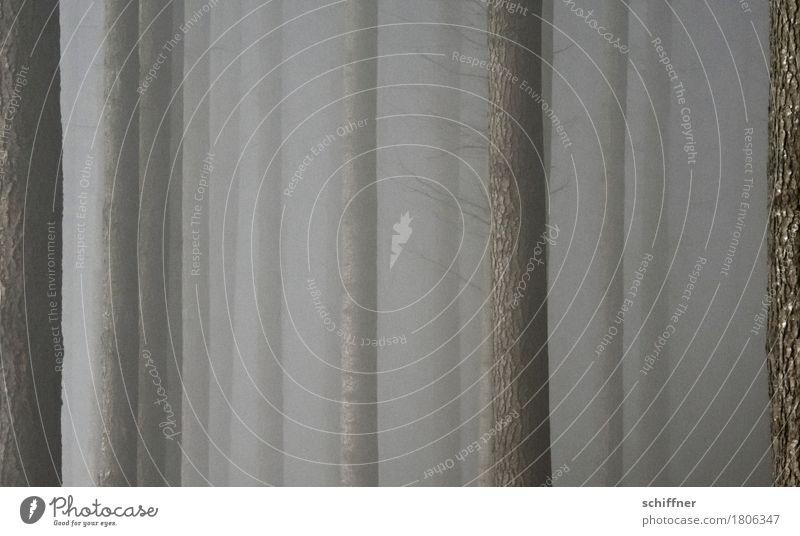Schleierhaft Natur Herbst Winter schlechtes Wetter Nebel Pflanze Baum Wald dunkel Baumstamm Nebelschleier Nebelbank Nebelwand Nebelwald Nebelstimmung