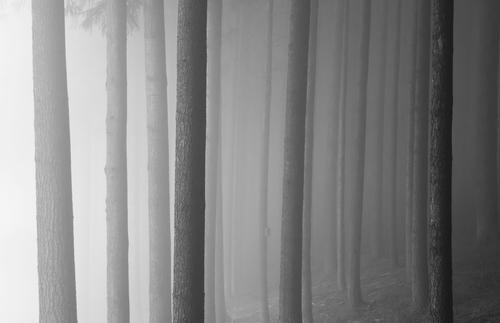 Vollpfosten Natur Baum Winter dunkel Wald Traurigkeit Herbst Nebel Angst bedrohlich Baumstamm Platzangst stagnierend schlechtes Wetter Waldrand Nebelschleier
