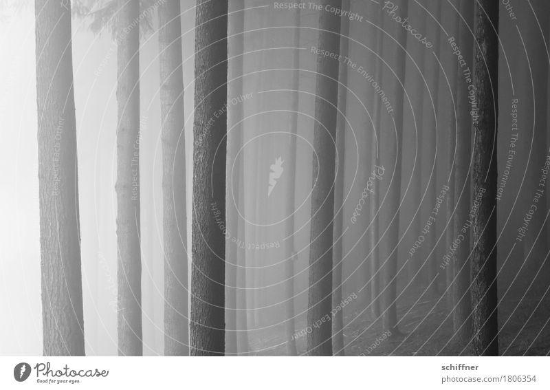 Vollpfosten Natur Herbst Winter schlechtes Wetter Nebel Baum Wald bedrohlich dunkel stagnierend Baumstamm Nebelschleier Nebelbank Nebelwald Nebelwand