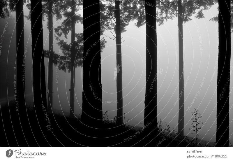 The Darker Side Natur Winter schlechtes Wetter Nebel Pflanze Baum Sträucher Wald dunkel grau schwarz geheimnisvoll Angst Einsamkeit Trauer Baumstamm Tanne