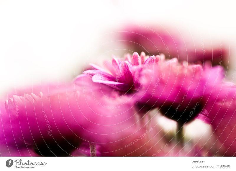 Vorgarten I Farbfoto Außenaufnahme Makroaufnahme Menschenleer Textfreiraum oben Tag Schwache Tiefenschärfe Zentralperspektive Umwelt Natur Landschaft Pflanze