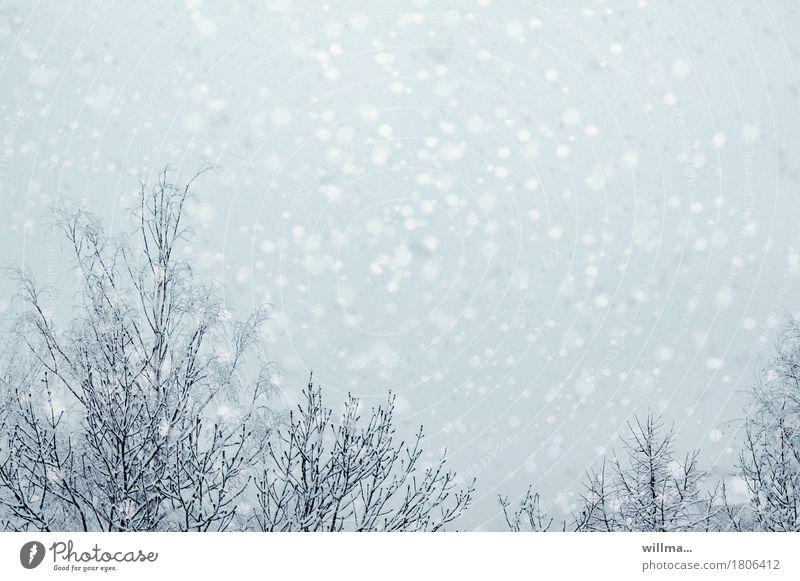 Schneegestöber Winter Schneefall Baum hell Flockenwirbel Schneeflocke winterlich Schneetreiben