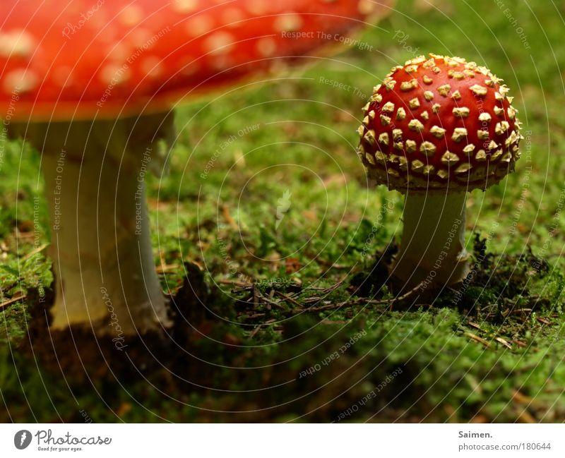 herbstliche Sinneserfahrung Natur grün rot Pflanze Freude Umwelt Herbst Gefühle Glück Erde außergewöhnlich elegant gefährlich stehen Boden bedrohlich