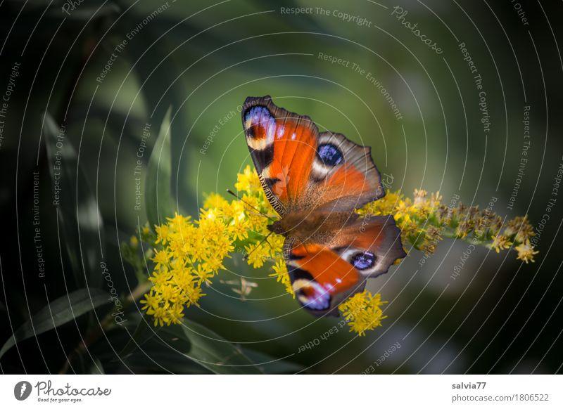 4 Augen Natur Pflanze Sommer schön Blume Tier Leben Blüte Glück Garten Park Wildtier Idylle ästhetisch genießen