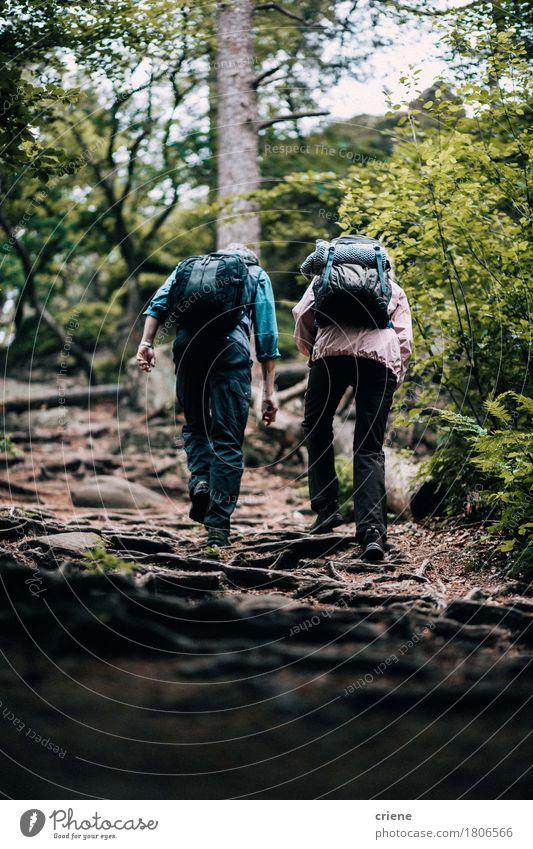 Geeigneter reifer Paarwandernder durch Wald Mensch Frau Mann Baum Wolken Freude Erwachsene Senior Lifestyle Sport Zusammensein Aktion 45-60 Jahre