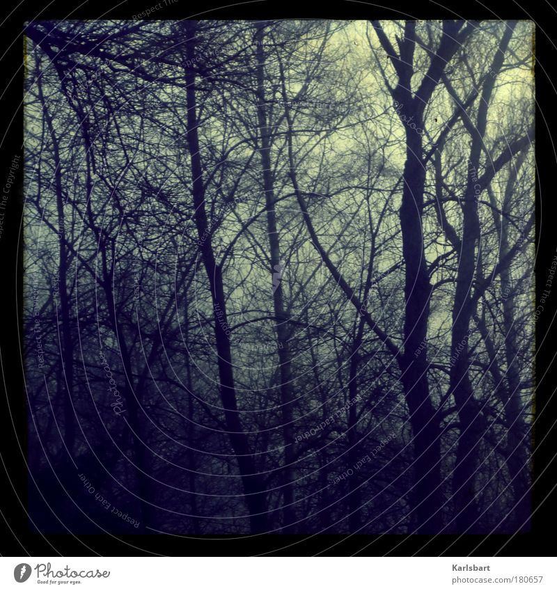 november. Lifestyle Design Umwelt Natur Sonnenaufgang Sonnenuntergang Herbst Winter schlechtes Wetter Sturm Nebel Gewitter Baum Ast Wald kalt Angst bizarr