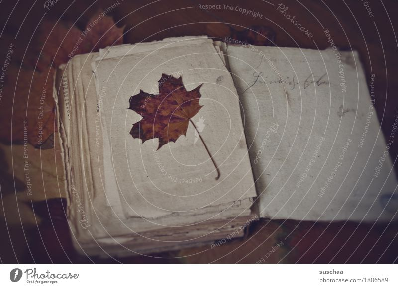 altes buch V Buch Buchseite lesen schreiben Tagebuch Lebenslauf Schriftzug Handschrift Printmedien Herbst Blatt Papier retro dunkel Traurigkeit altmodisch