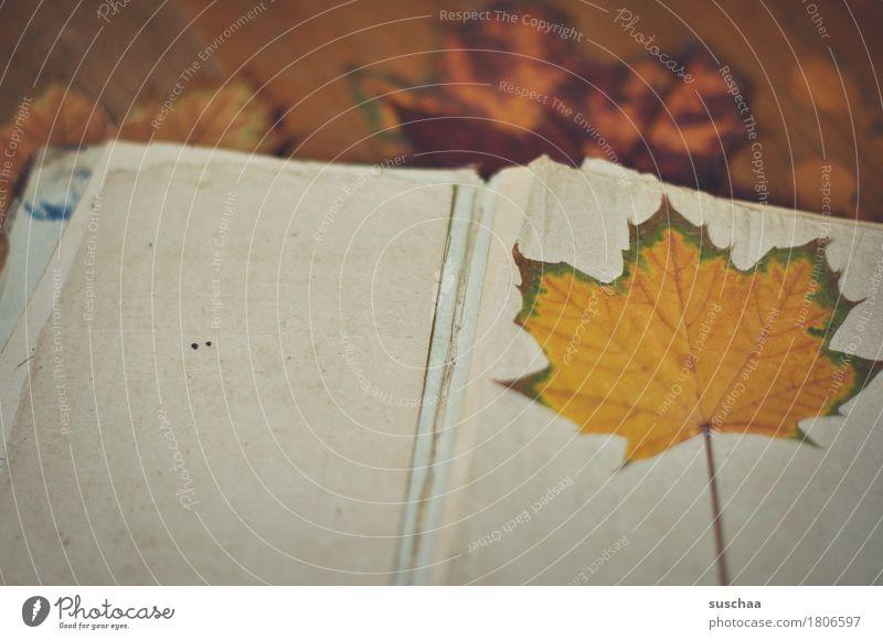 unbeschriebenes blatt II Buch Buchseite leer Blatt Papier Herbst alt kaputt retro lesen schreiben Tagebuch Notizbuch Erbe Traurigkeit analog Wissen Nostalgie