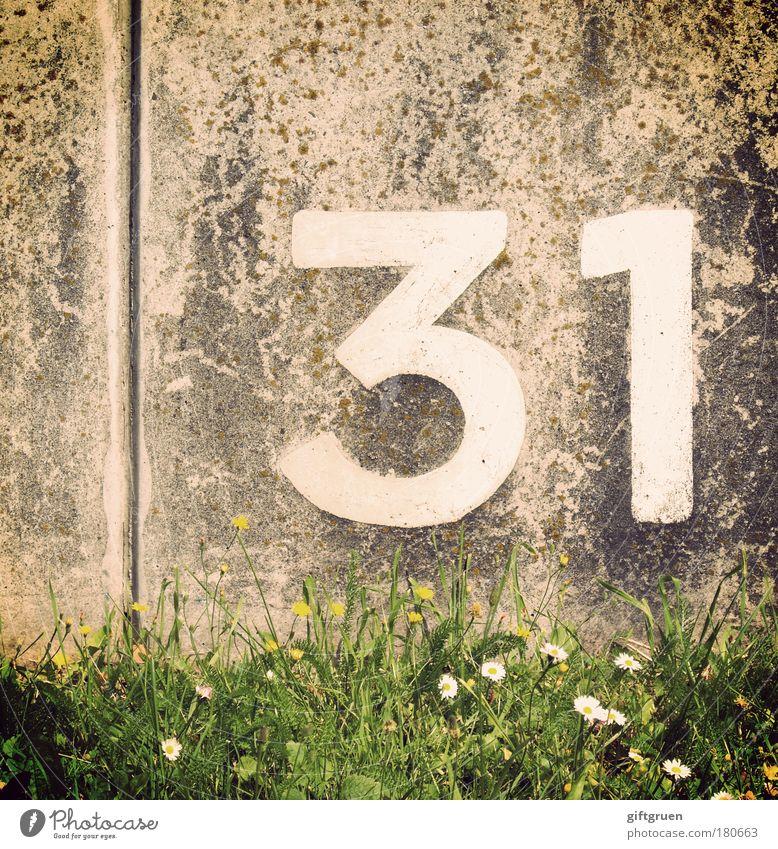 gallium Wiese Gras Mauer Linie Geburtstag Beton Ordnung Schriftzeichen Ziffern & Zahlen schreiben Zeichen Gänseblümchen Furche sortieren rechnen zählen