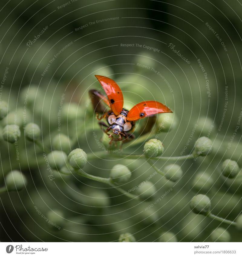 ...3..2..1... Natur Pflanze grün Tier Umwelt Blüte Frühling Freiheit fliegen orange Wildtier ästhetisch Sträucher Beginn Flügel niedlich