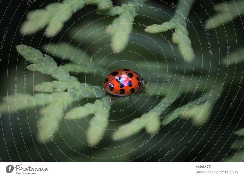 Hochglanz poliert Natur Pflanze Sommer grün Blatt Tier Frühling Wege & Pfade Glück orange glänzend Wildtier Sträucher einzigartig entdecken Leichtigkeit